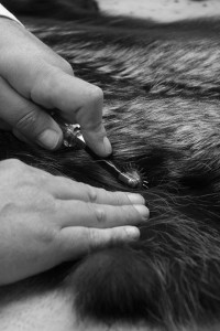Picking 1 Fur - SHERì Fur Hand Made in Italy